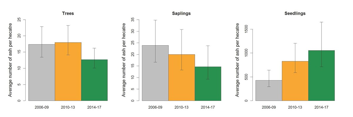 A trio of graphs showing average number of ash per hectare for trees, saplings, and seedlings.