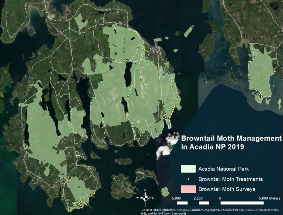 Map of Browntail Moth Management in Acadia