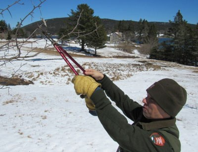 Park staff member in uniform cuts a tree branch with dry, curled leaves with small insect web