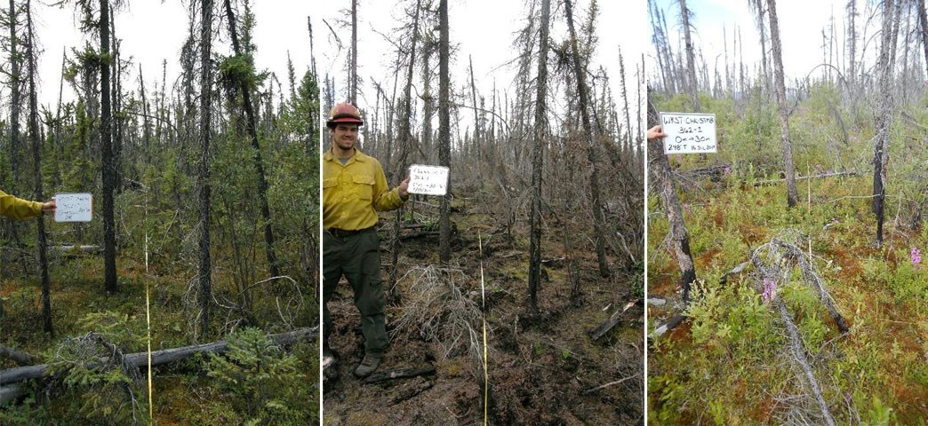 Three photos side-by-side showing black spruce forest at pre-fire and 1 and 8 years post fire.