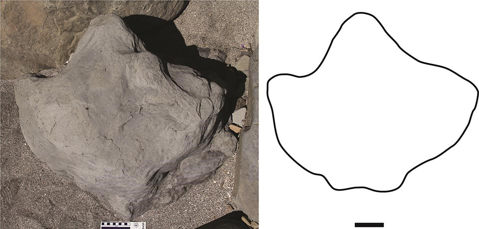 An image of an excavated dinosaur print with an outline drawing of the shape.