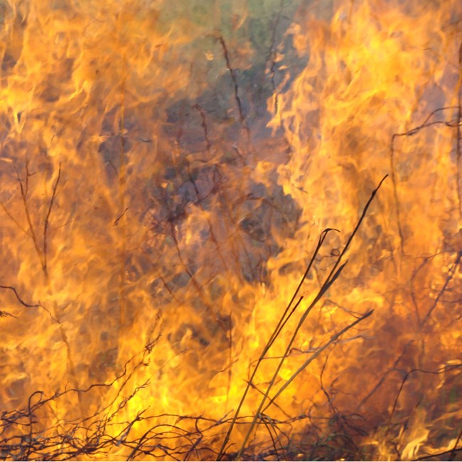 Close-up of flames in tall grass