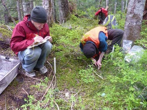 Two people croach down and write notes as they observe the forest floor.