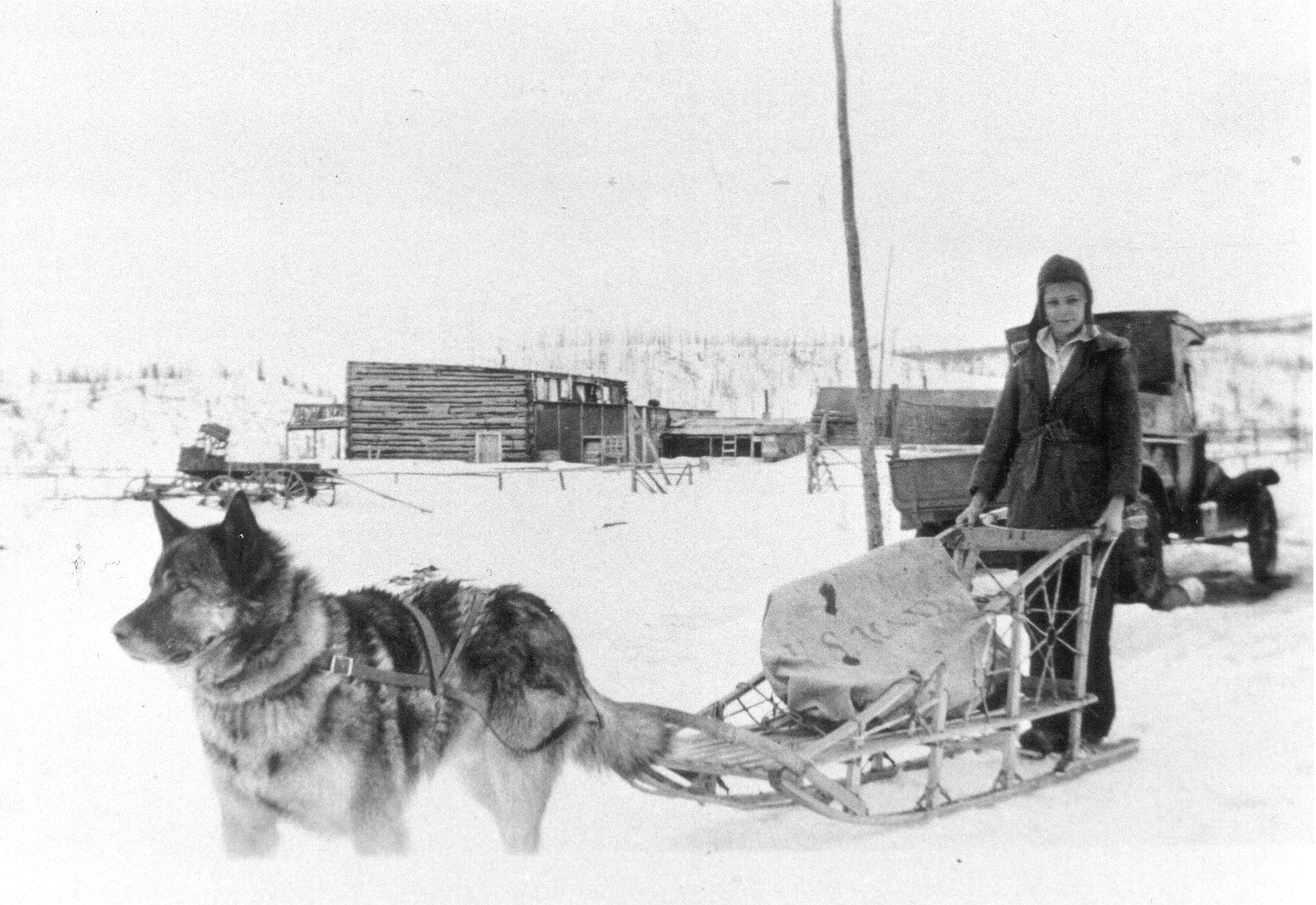 a woman on a sled pulled by a dog