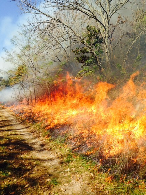 Large flames engulf a patch of grasses and shrubs at Pea Ridge National Military Park.
