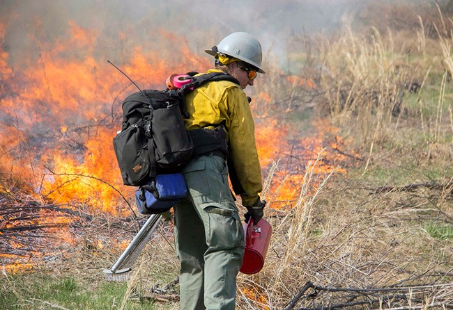 A firefighter uses a drip torch to ignite vegetation.