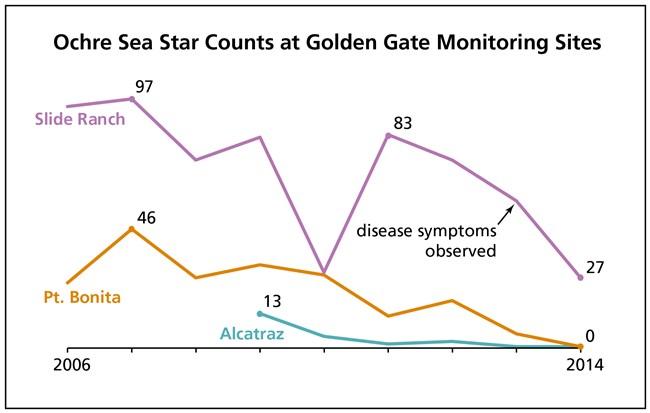 Sea Star Diagram - Wiring Diagrams ROCK