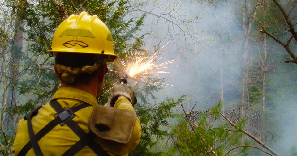 Wildland firefighter uses a flare gun to ignite a prescribed fire in a wooded area.