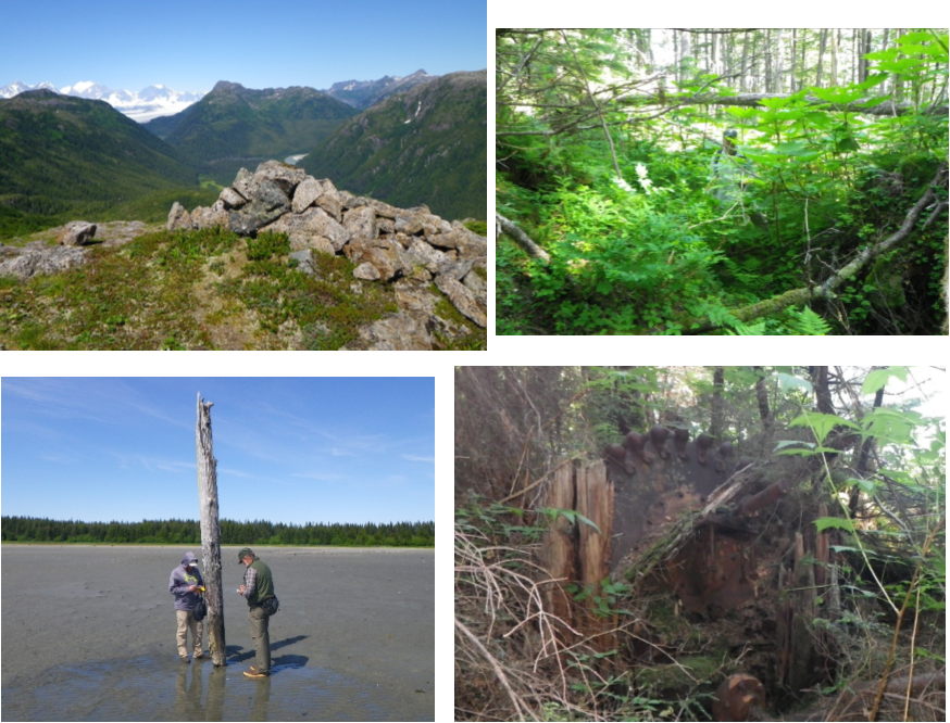 a collage of four images: mountains, vegetation, a large tree stump, and a dead tree