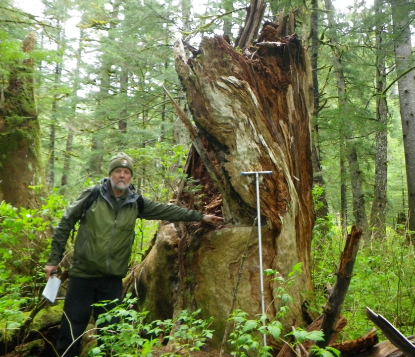 a man points at a large tree stump in the rainforest