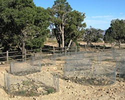 a fenced off area with several planting sites protected by chickenwire