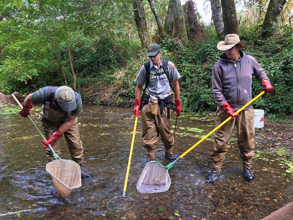 Three people wearing waders, standing in a creek with nets and electrofishing gear