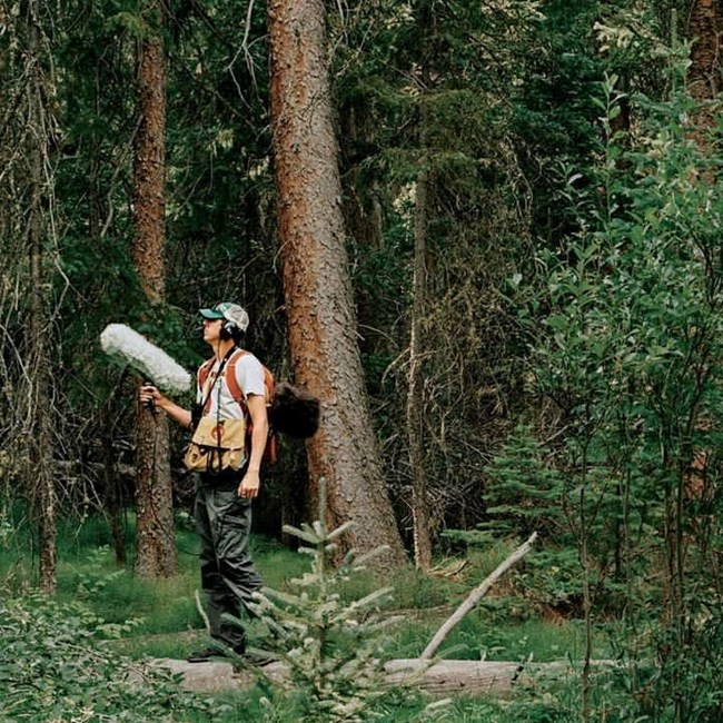Profile, summer view of Jacob Job standing in dense forest holding a microphone with wind muff.