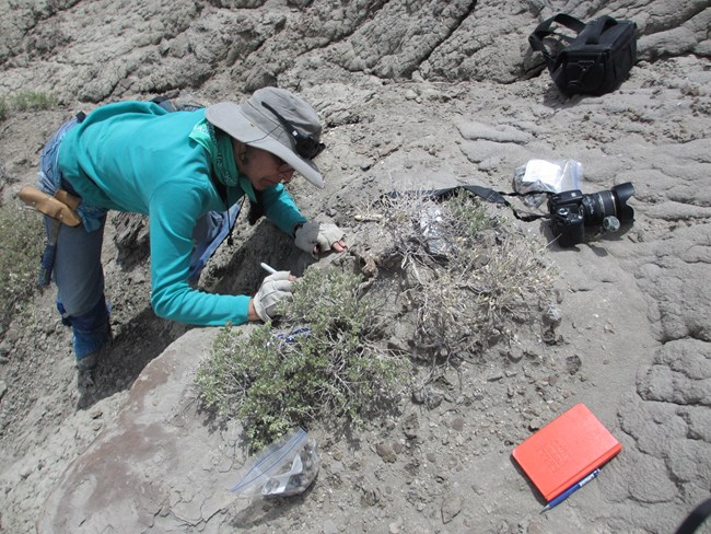 scientist unearthing fossil on rocky hillside