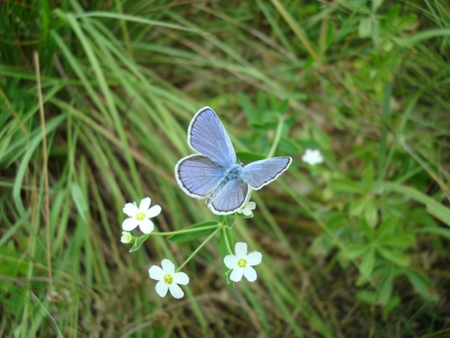 A small blue butterfly on a green plant
