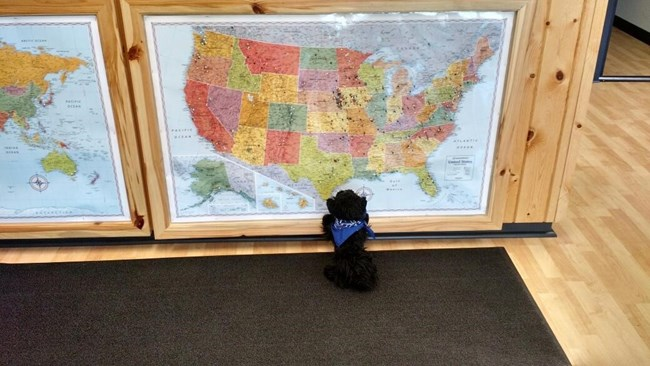 Toy dog looking at a map