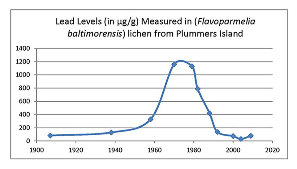 Graph showing lead levels in lichens on Plummers Island over 100 years.