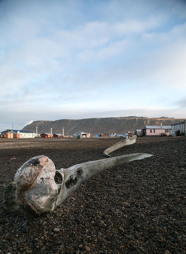 An animal bone lies on the gravel covered road, behind it colorful houses dot the horizon.