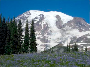 A wildflower meadow in front of a view of Mount Rainier.