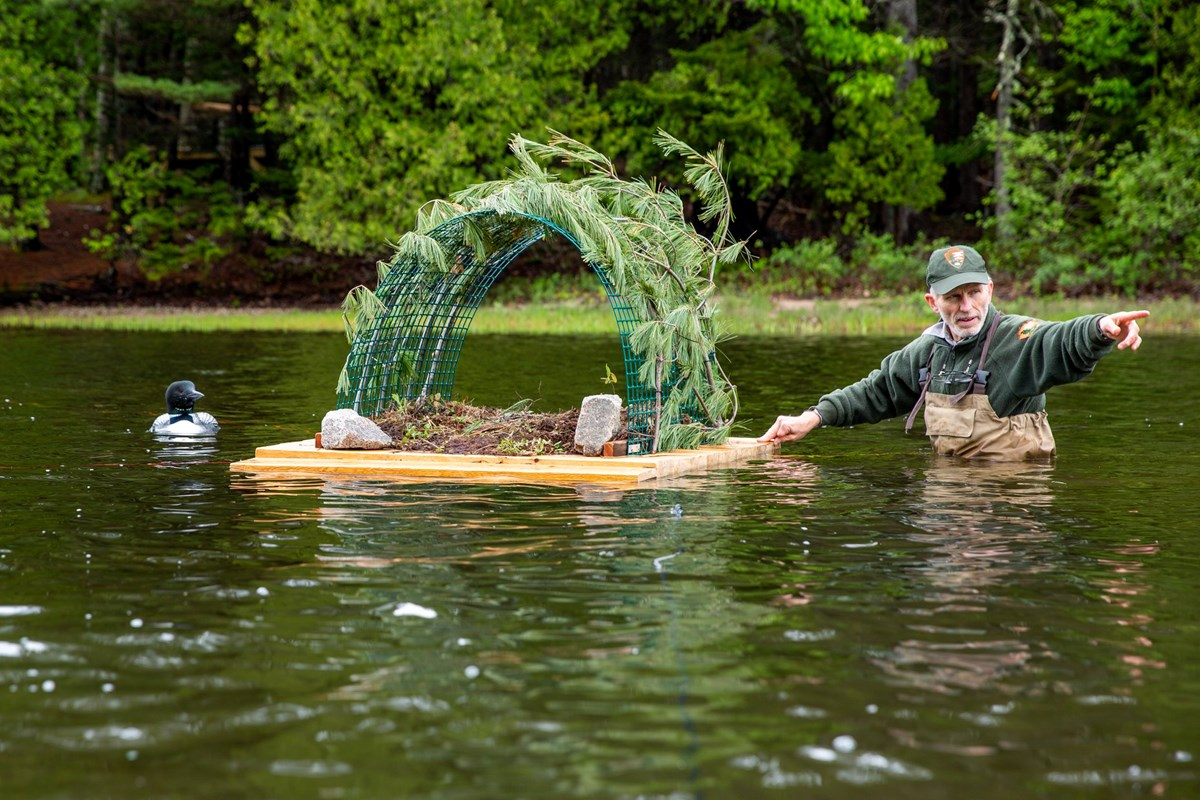 "loon on the water as researcher approaches with ""raft"" habitat"
