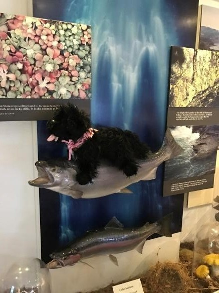 toy dog sitting on the fish