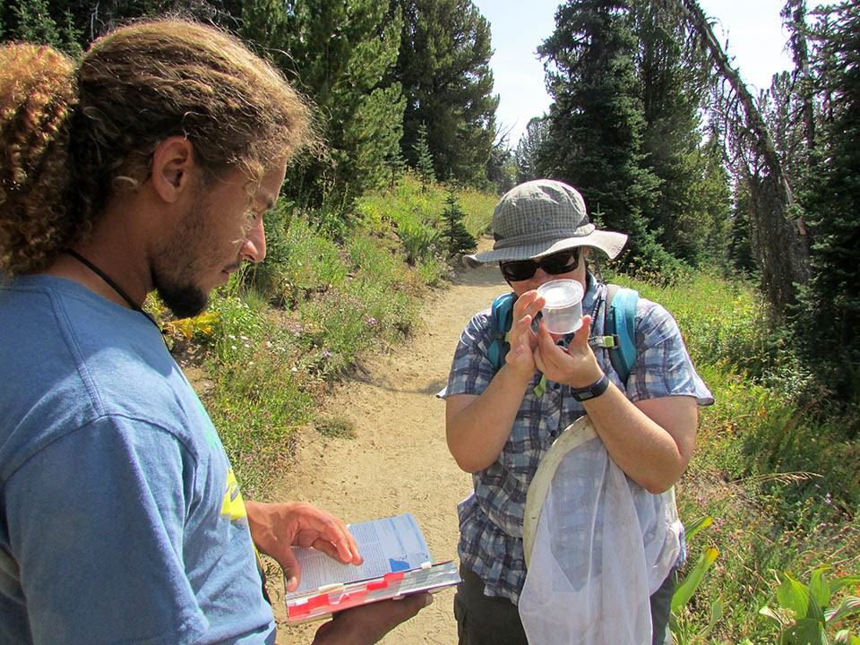 One person holds a butterfly in a viewing container while another checks a field guide book