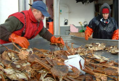 two people sort crabs on a fishing boat deck