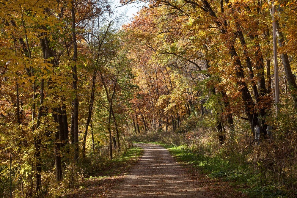 A walking trail leads away into a golden woodland.