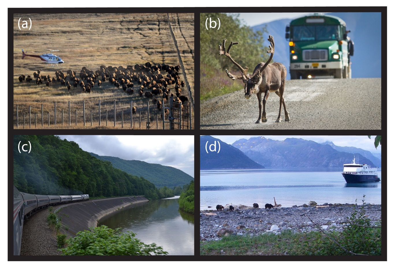 four images: a heard of elk, a bus driving toward a caribou, a train traveling along a lake, a boat on a lake