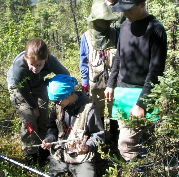 Students in the North for Science program measuring an unburned plot just outside the 2005 Chapman Creek Fire for comparison.