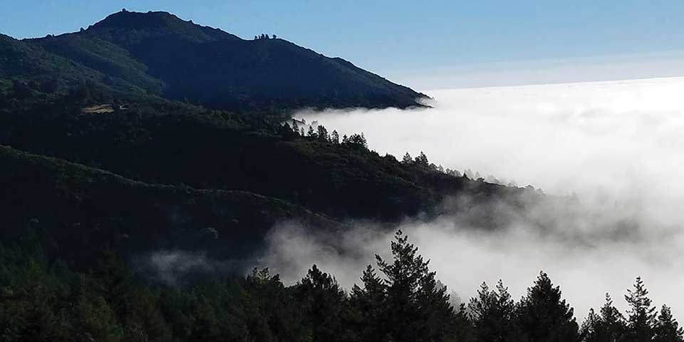 Forested Mount Tamalpais rises above lowland fog.