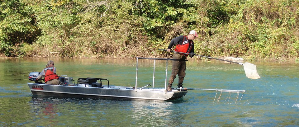 Electrofishing at Ozark National Scenic Riverways