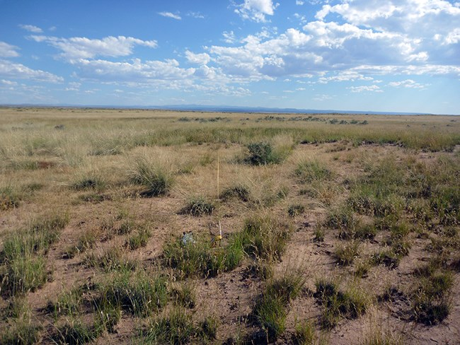 : Expansive grassland with bare ground visible under a blue sky with scattered clouds.