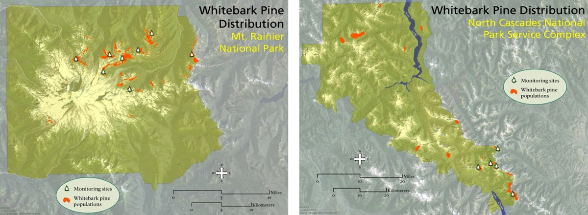 Map of whitebark pine monitoring plot locations in Mount Rainier (left) and North Cascades (right) National Parks.