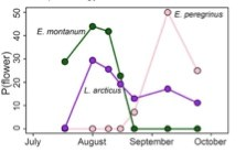 A line graph showing the probability of seeing three different kinds of flowers during different points in the summer