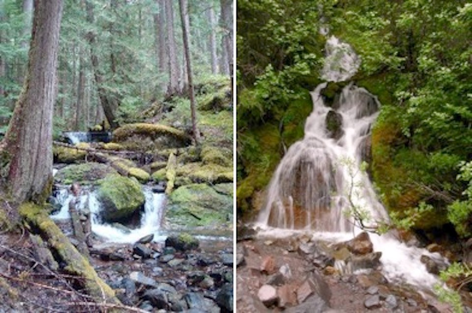 Two pictures of forested habitats with water running through them