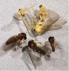 A group of yellow and brown insects