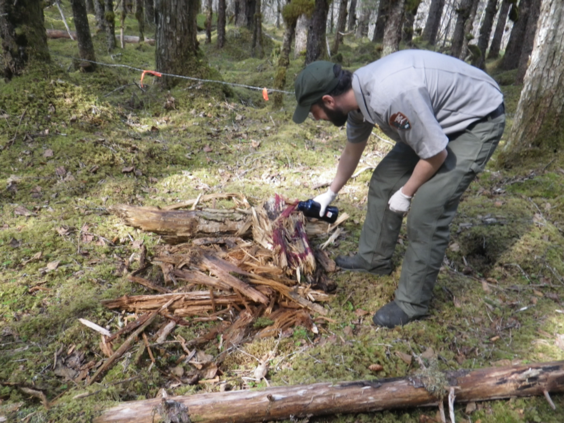 a person sprays liquid on to a pile of wood in a forested area