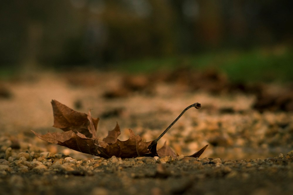 A dry leaf falls to the ground.