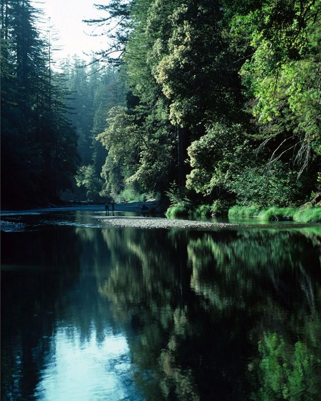 redwood creek in deep forested gorge