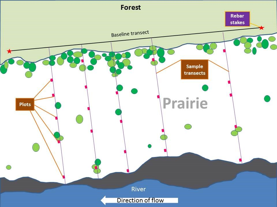 Example diagram showing monitoring transects and plots relative to the prairie and river.
