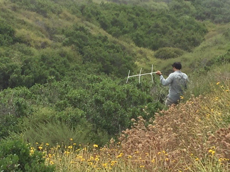 Researcher Roman Nava on a hillside holding up a radio antenna and receiver