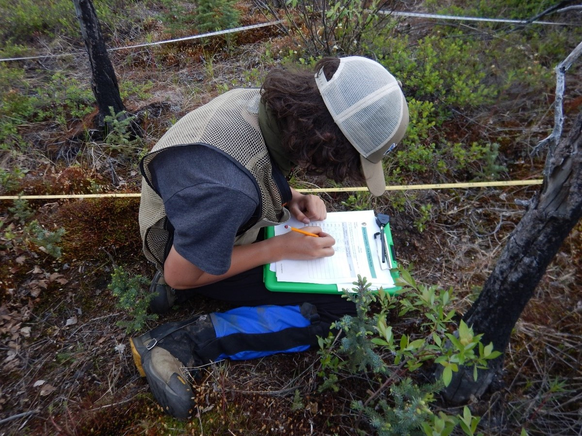 A student kneeling in vegetation records active layer depths on a clipboard.