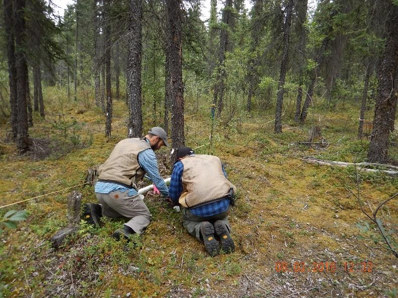 Researchers from University of Montana collect tree cores from the WRST McCarthy University Subdivision fuels treatment site to age the stand and determine time since last disturbance.