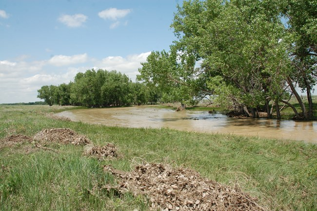 river and cottonwood trees