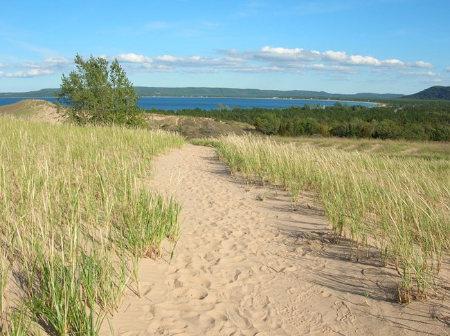 dune trail and grasses