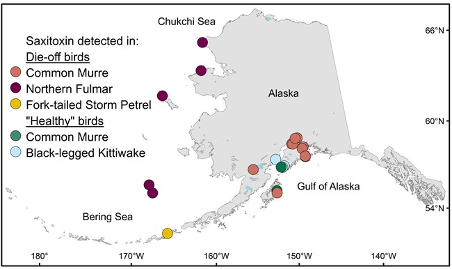 Map of Alaska coastline with color-coded circles indicating locations and species of birds with saxitoxin in their systems.