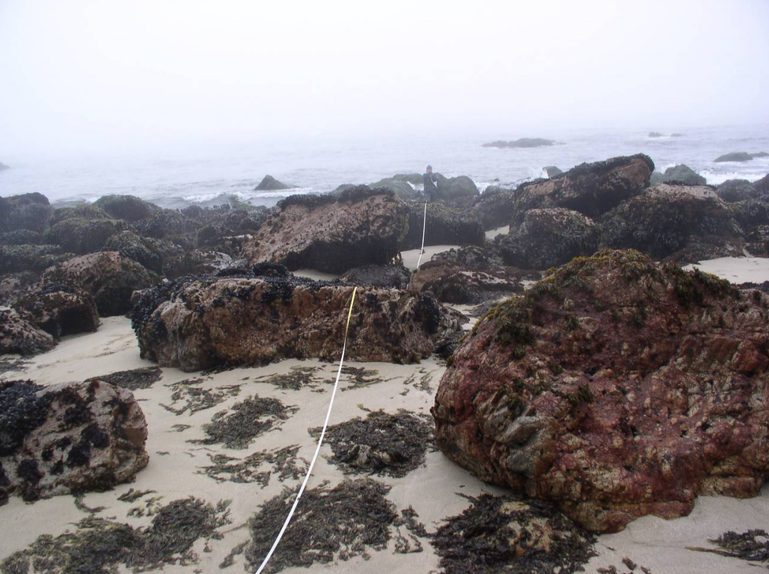 A biologist surveys the rocky intertidal zone at Point Reyes.