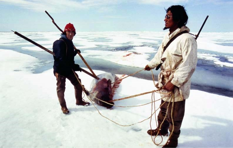 Two subsistence hunters pull a recently harvested seal from icy waters in Alaska.