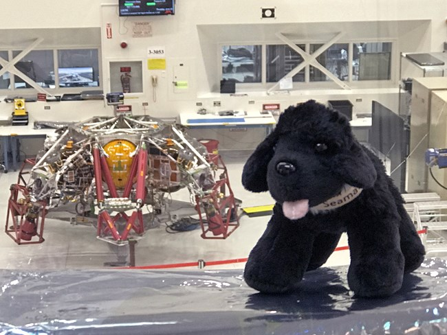 toy dog overlooking insight aircraft